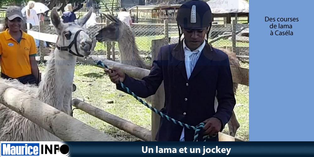 Un lama et un jockey